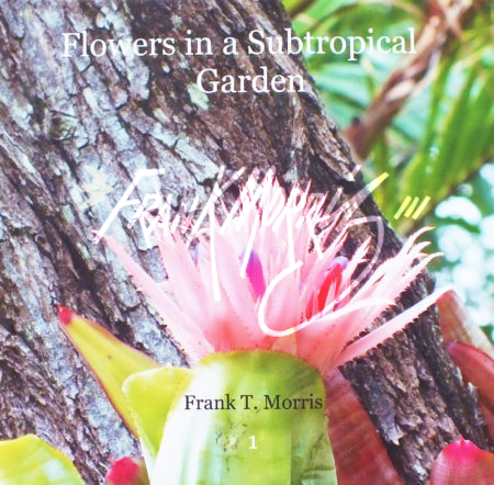 "Flowers in a Subtropical Garden   18x18 cm (7x7"")   $75"