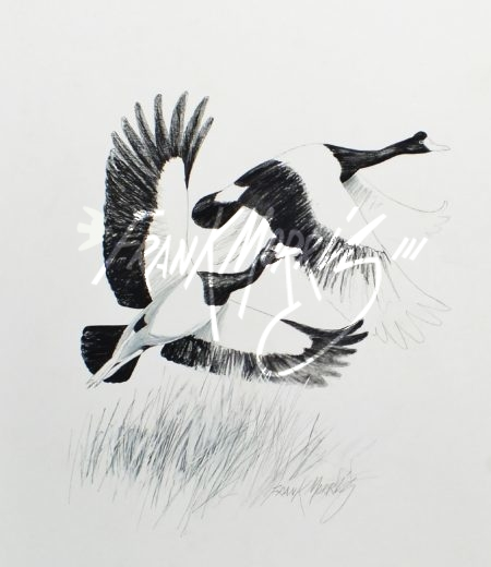 (YPC106) Magpie Geese 76x51 cm $180