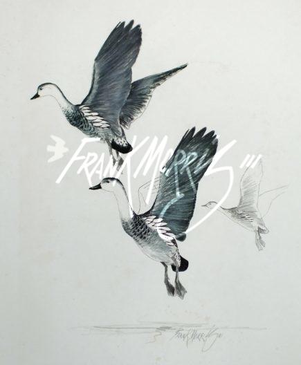 (YPC107) Wandering Whistling-Ducks 76x51 cm $180
