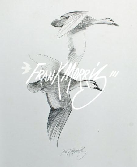 (YPC114) Pacific Black Ducks 76x51 cm $160