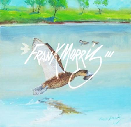 (Y798)  Musk Ducks Lake Windermere  28x28 cm $300