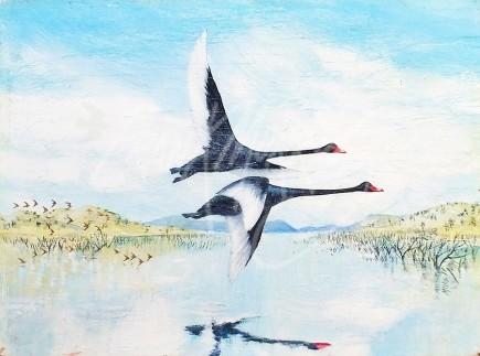 (154) Black Swans, Lake Eildon 2  15x20 cm