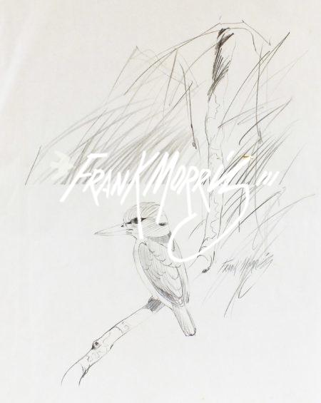 (PSKL3)  Resting Yellow-billed Kingfisher  57x40 cm $40