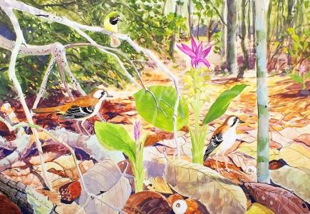 (CY102) Scrub Robins, Lockerbie Scrub  45x64 cm