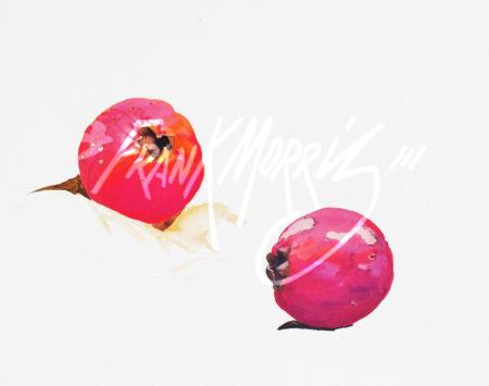 (SpK2)  Fallen fruits – Cape York  32x50 cm $70