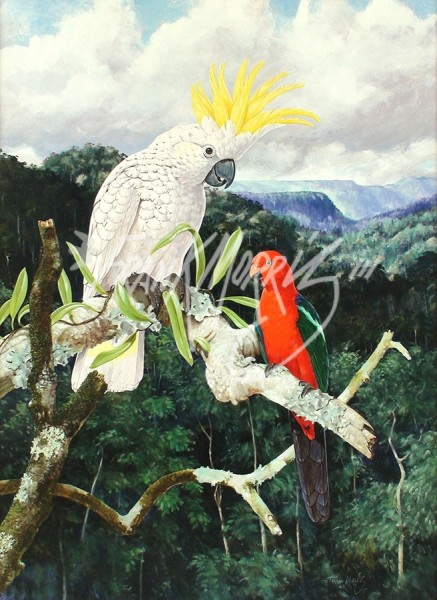 (Y395) 84 x 62 cm A Chance Encounter (White Cockatoo and King Parrot) SOLD