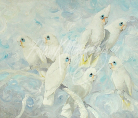 (Y407) Like Cacatua Blossoms (Little Corellas) 71 x 85 cm
