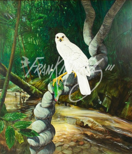 (Y482) 105 x 91 cm Forest Queen (White Goshawk and Rose-crowned Fruit-dove) SOLD