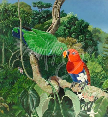 (Y387) A Loving Pair (Ectlectus Parrots) 70 x 65 cm SOLD