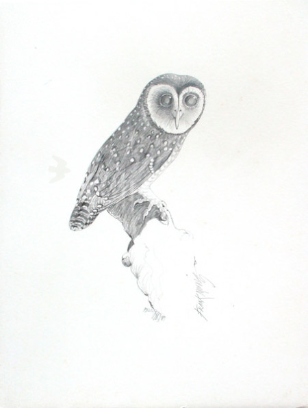 (PD23) Sooty Owl 76 x 51 cm SOLD