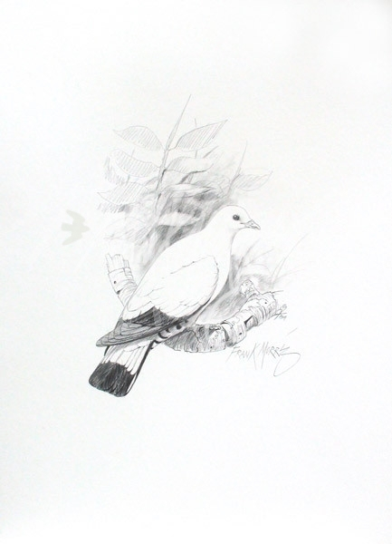 (PD19) Torresian Imperial Pigeon 74 x 51 cm SOLD