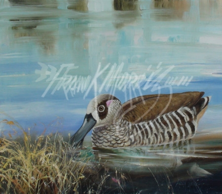 (Y445) Alone (Pink-eared Duck) 33 x 38 cm