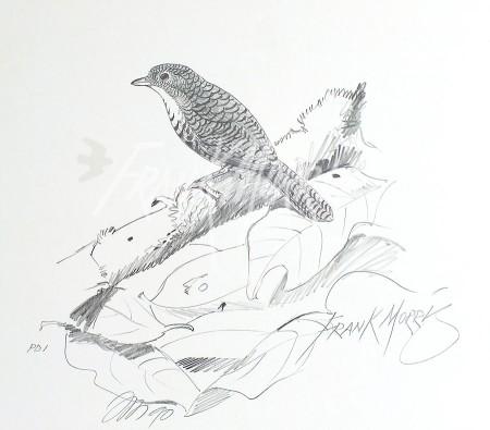 (PD1)Rufous Scrub-Bird76x51cmSOLD