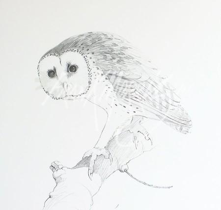 (PD6)Masked Owl76x51cm$60