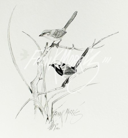 (PD30)Red-Winged Fairy-Wrens76x51cm$60