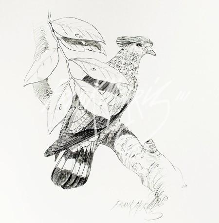 (PD16)Topknot Pigeon76x51cm$60