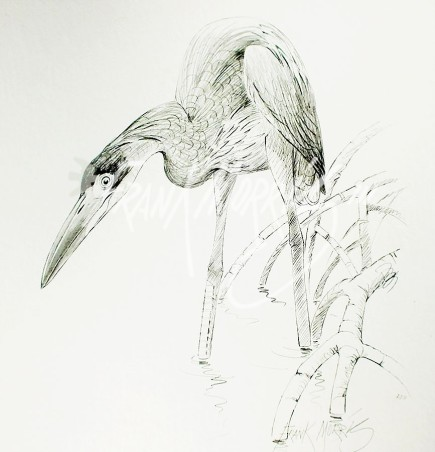 (PD11)	Great-Billed Heron	76	x	51	cm	$60