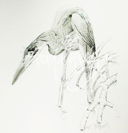 (PD11)Great-Billed Heron76x51cm$60