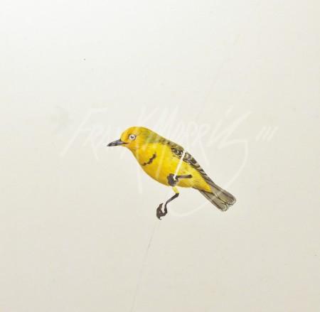 (FS1)  Yellow Chat  36x30 cm $75