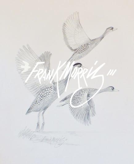(YPC103) Spotted Whistling-Ducks 76x51 cm $160