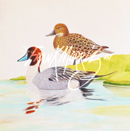 (Y801)  Pintails  61x61 cm $800