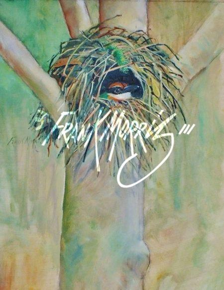 (YPH01)  A Nesting Pitta  35x28 cm  $230