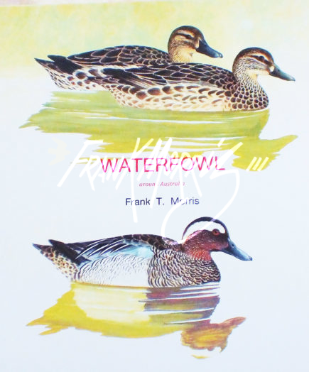 "Waterfowl around Australia   30x30 cm (12x12"")   $195"