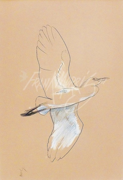 (433) Cattle Egret  51x76 cm  $125