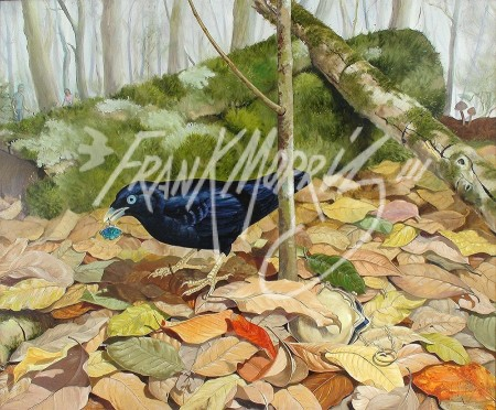 (Y469) Lost and Found (Satin Bowerbird) 51 x 61 cm $375