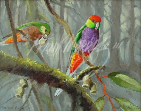 (Y509) Woodland Dandy (Red-capped Parrots) 20 x 25 cm