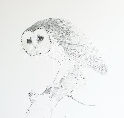 (PD6)	Masked Owl	76	x	51	cm	$60