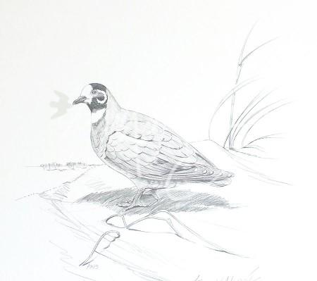 (PD13)Flock Pigeon76x51cm