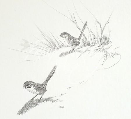 (PD28)Eyrean Grasswrens76x51cm$60