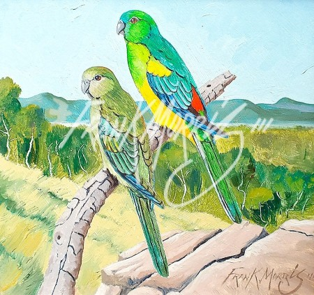 (Y779) 20 x 20 cm Red-Rumped Parrots $80