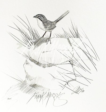 (PD26)	Carpentarian Grasswrens	76	x	51	cm	$60