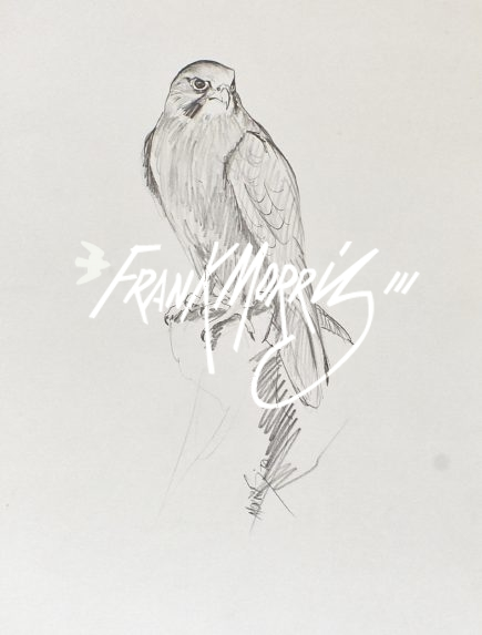 (PP1) Black Falcon 51x43 cm